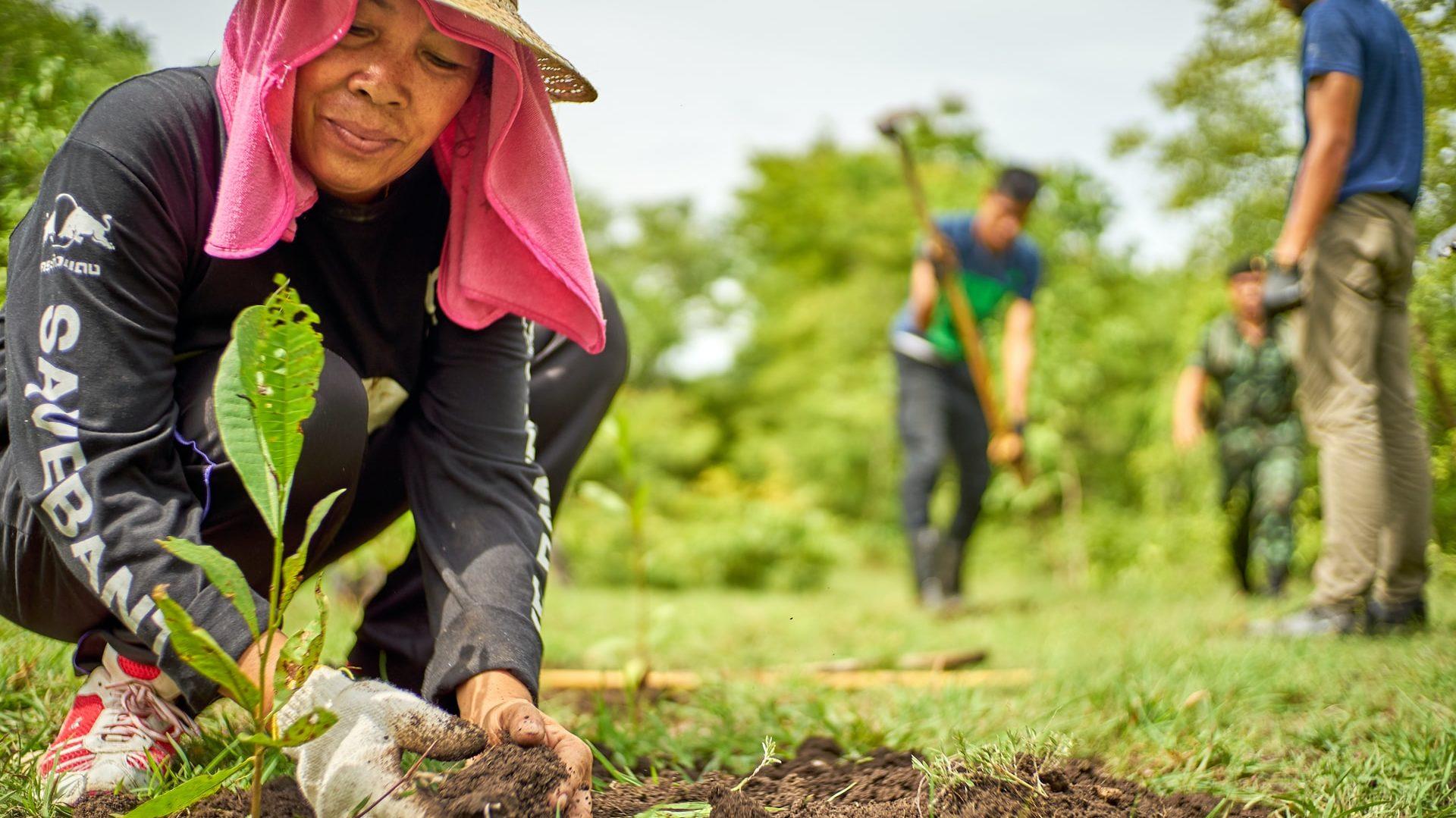 Frau pflanzt einen Setzling