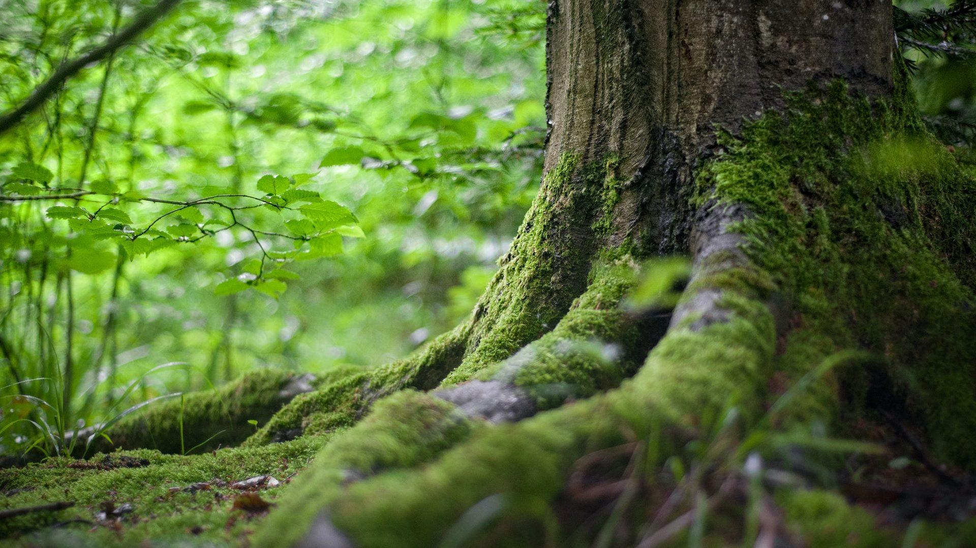 Nahaufnahme eines alten Baums